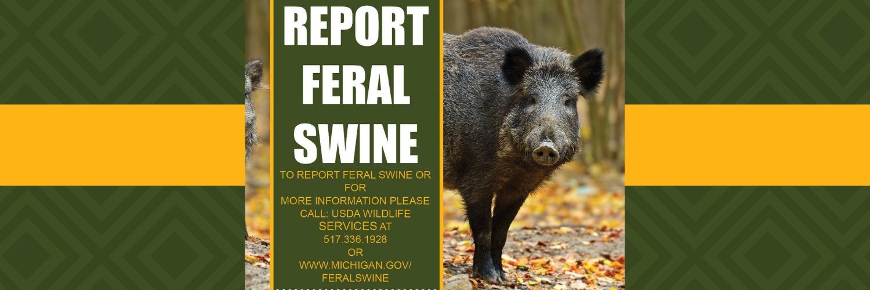 Report Feral Swine