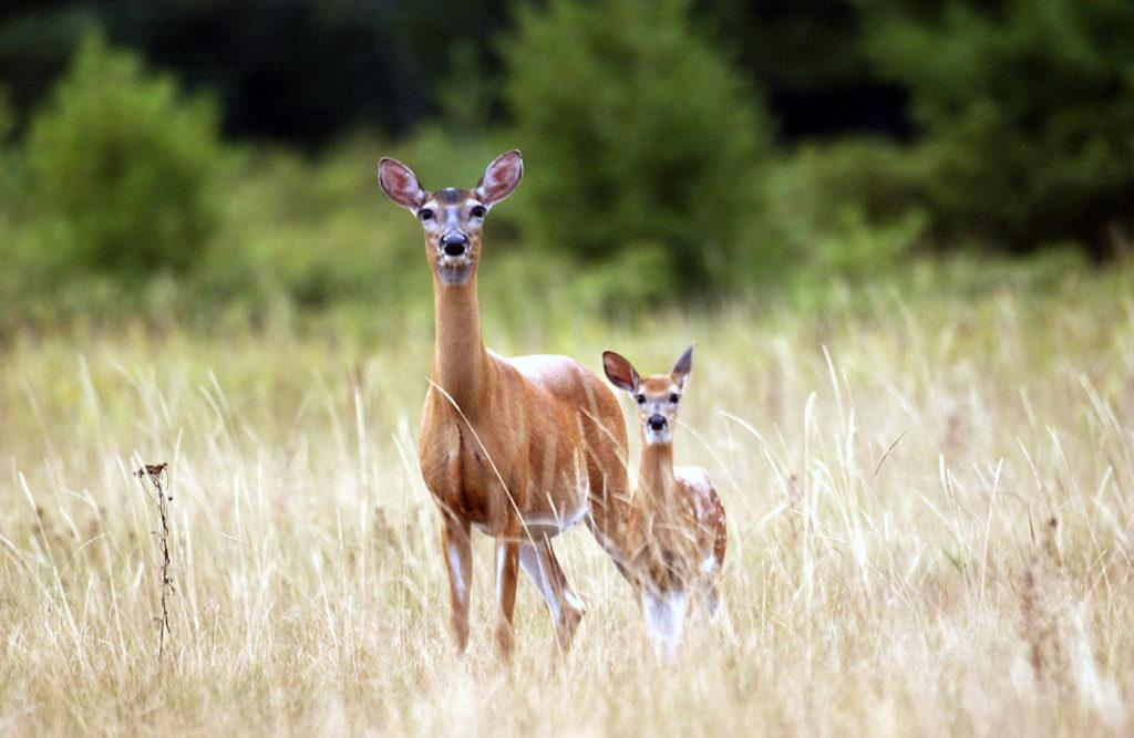 Deer Hunter 2021 Spielen
